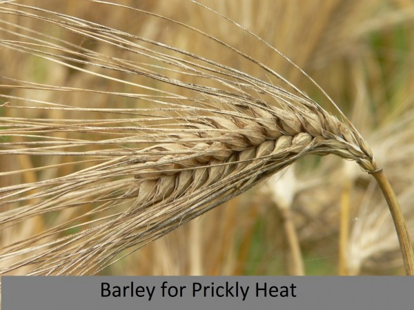 prickley heat_barley